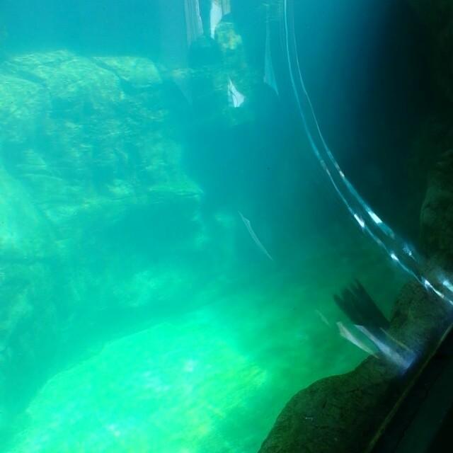 Aquarium of the pacific. Seals and sea lions.