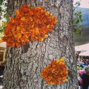 These look like orange peel fungus. They grow on trees. But these are made out of coffee cup lids, by one of the artists exhibiting at The Festivalof the Arts in Laguna Beach. #FestivalPageant