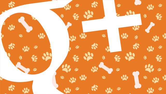google-plus-dog-community