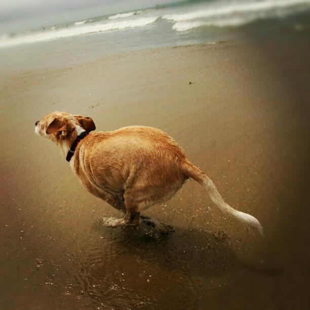 Running at the beach