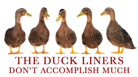 Only in photoshop will you ever get ducks to line up in a row