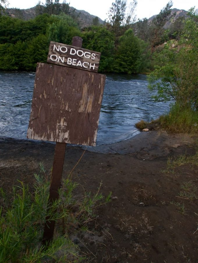 No dogs at the beach
