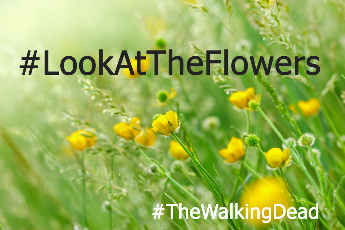 Poster from The Walking Dead about Look at the Flowers